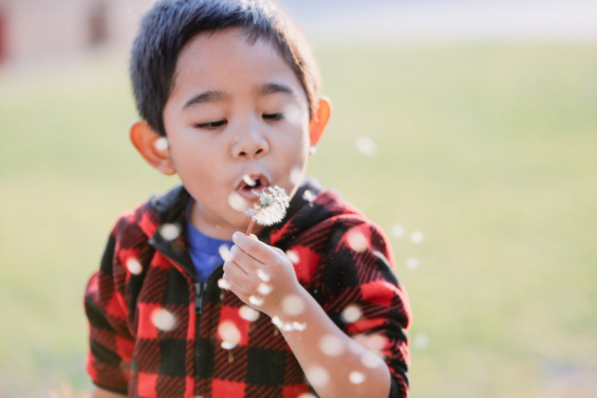 Decorative image: Young diverse boy with cropped, dark brown hair dressed in red and black checkered swandri shirt seen from chest up and facing right. Boy blows a dandelion and the tiny florets scatter in the air, blurred in front of him.